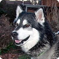 Adopt A Pet :: KALLI-Adoption Pending - Boise, ID