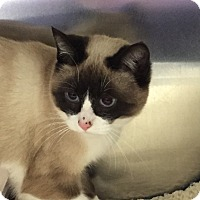 Adopt A Pet :: Sami - Richfield, OH
