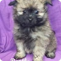 Adopt A Pet :: Bentley - Bartonsville, PA
