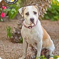 Adopt A Pet :: MISTY - Chandler, AZ