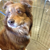 Adopt A Pet :: Rusty - Parker, KS