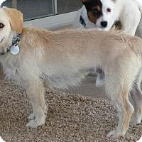Adopt A Pet :: Boots - Scottsdale, AZ