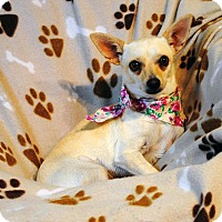 Adopt A Pet :: Annie - Weatherford, TX