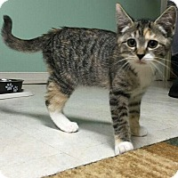 Adopt A Pet :: Carina - Turnersville, NJ