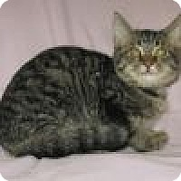 Adopt A Pet :: Cisco - Powell, OH