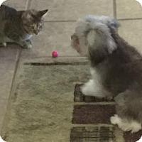 Adopt A Pet :: Sandy - Little Rock, AR