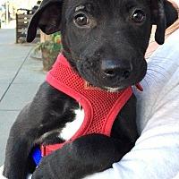 Adopt A Pet :: Sally-ADOPTION PENDING - Boulder, CO