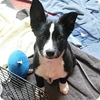 Adopt A Pet :: Lola - Oakland, CA