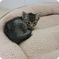 Adopt A Pet :: Zaden - Chippewa Falls, WI