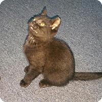 Adopt A Pet :: Knight (foster care) - Philadelphia, PA
