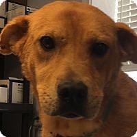 Adopt A Pet :: Baleigh - Billerica, MA