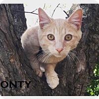 Adopt A Pet :: Monty - Speedway, IN