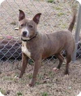 Terrier (Unknown Type, Medium) Mix Dog for adoption in Joliet, Illinois - Dixie