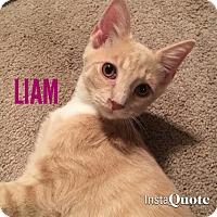 Adopt A Pet :: Liam - Tega Cay, SC