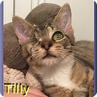 Adopt A Pet :: Tilly - Aldie, VA