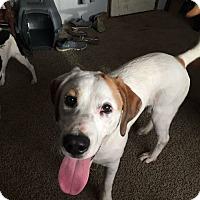 Adopt A Pet :: Dixie - Salamanca, NY