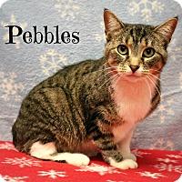 Adopt A Pet :: Pebbles - Melbourne, KY
