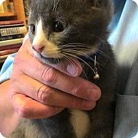 Adopt A Pet :: Dumpling - Fresno, CA