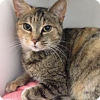 Adopt A Pet :: Joyce - Hendersonville, NC