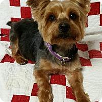 Adopt A Pet :: JoJo Montgomery - Urbana, OH