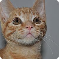 Adopt A Pet :: Mayor - La Canada Flintridge, CA