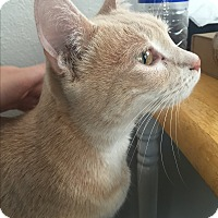Adopt A Pet :: Ben-good first pet - Los Angeles, CA