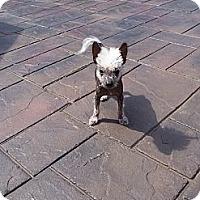 Adopt A Pet :: Zebidiah aka Zeb - Lexington, TN