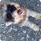 Adopt A Pet :: Haley Ann