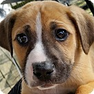 Adopt A Pet :: Birney! **FOSTER NEEDED**
