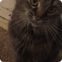 Adopt A Pet :: Bella-Courtesy Post - North Olmsted, OH