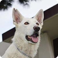 Adopt A Pet :: Star - Downey, CA
