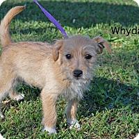 Adopt A Pet :: Whyduh - Barnesville, GA