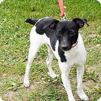 Adopt A Pet :: Jethro - Shelby, MI