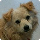 Adopt A Pet :: Trent