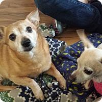 Adopt A Pet :: Jerry & Lola - Sweet Senior Pa - Kirkland, WA
