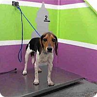 Adopt A Pet :: Dano - Houston, TX