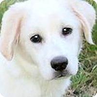 Adopt A Pet :: PANDA(ADORES HIS FAMILY!! - Wakefield, RI