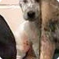 Adopt A Pet :: Martha - Boulder, CO