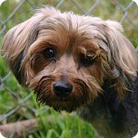 Adopt A Pet :: Posh - Waldorf, MD