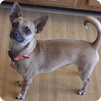 Adopt A Pet :: Bruiser - Quail Valley, CA