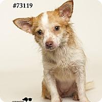 Adopt A Pet :: Willow - Baton Rouge, LA