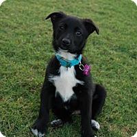 Adopt A Pet :: Halogen - Royal Palm Beach, FL