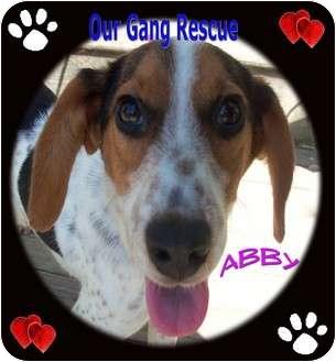 Beagle Mix Dog for adoption in Cincinnati, Ohio - Abby