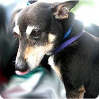 Adopt A Pet :: Mortie - Snellville, GA