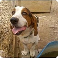 Adopt A Pet :: Lucky-Star - Acton, CA