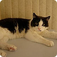 Adopt A Pet :: Jacob - Laguna Woods, CA