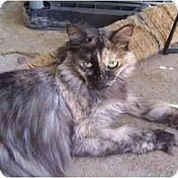Adopt A Pet :: Gizmo - El Cajon, CA