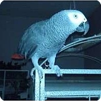 Adopt A Pet :: TAZ - Mantua, OH