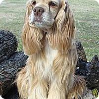 Adopt A Pet :: Georgia - Sugarland, TX