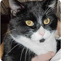 Adopt A Pet :: Ray - Pasadena, CA